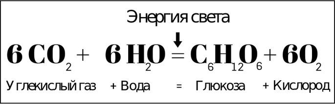 уравнение реакции фотосинтеза