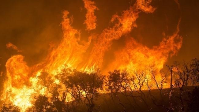 Лесной пожар глобальное потепление