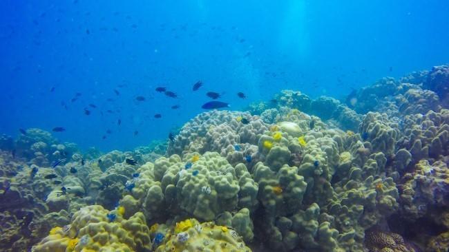 морская экосистема глобальное потепление