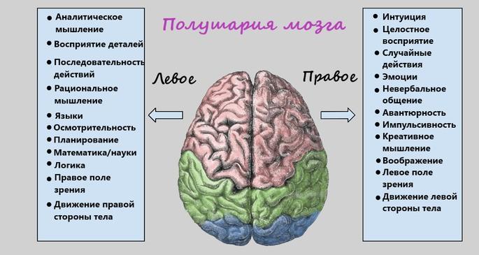 виды памяти полушария мозга