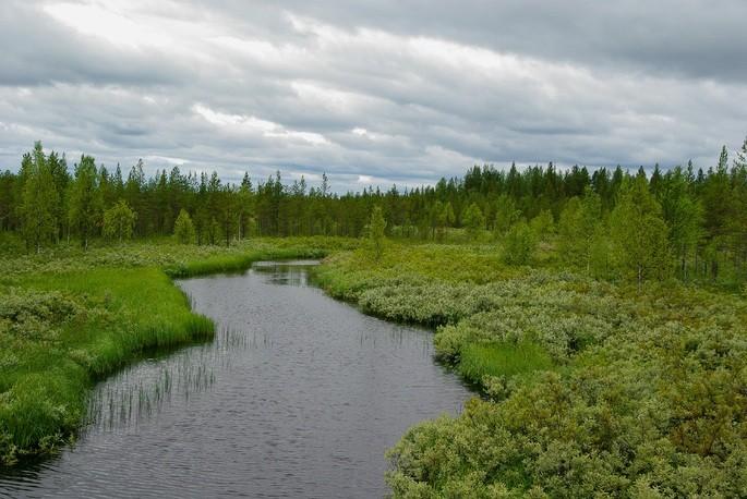 Заболоченная местность с зелёной травой и деревьями вокруг на фоне облачного неба в тайге